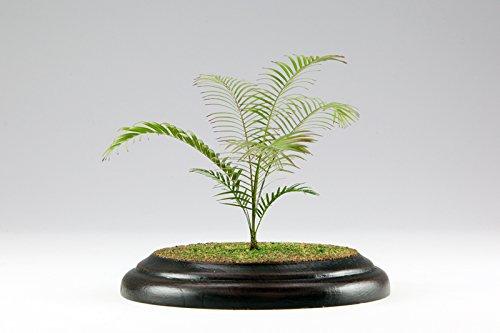 PHK12-01 1/12スケール 植物キットシリーズNo.1 アレカヤシ・エッチングキット