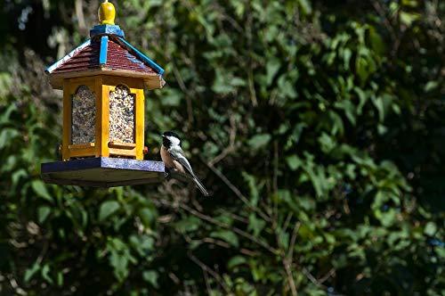 Chickadees Framed - Home Comforts Framed Art for Your Wall Bird Feeder Bird Backyard Black-Capped Chickadee Vivid Imagery 10 x 13 Frame