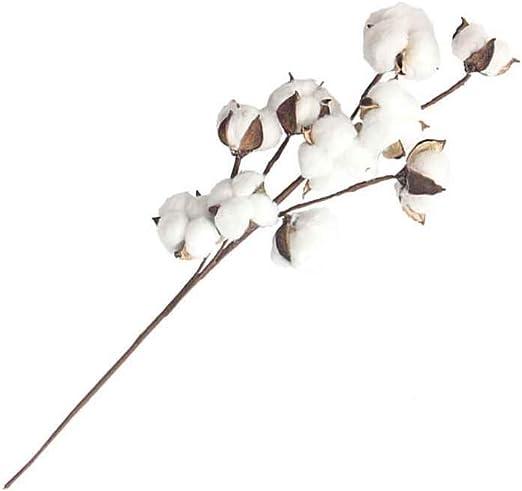 10 Jefes de Gossypium pétalos de Flores secas Naturales ...