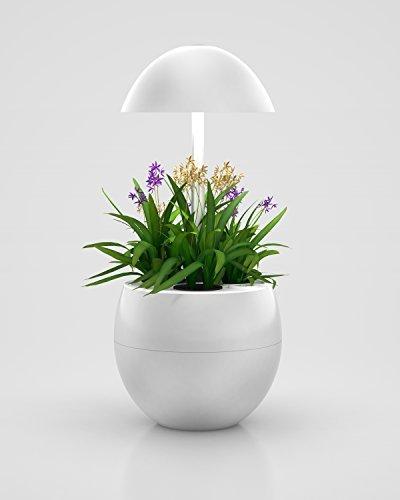 123WeGrow Hydroponic Indoor Garden System, LED Lights, Automatic, Grow Herbs, Grow Vegetables by 123WeGrow
