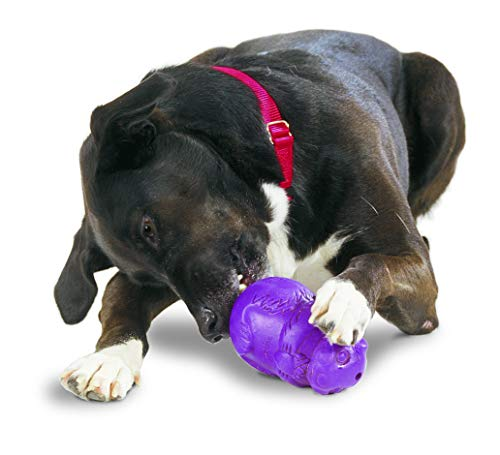 (PetSafe Busy Buddy Squirrel Dude Dog Toy, Treat Dispensing Dog Toy, X-Small, Small, Medium and Large Sizes)