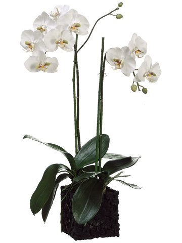 31'' Phalaenopsis Orchid Plant in Polyresin Container White Green by Silk Decor