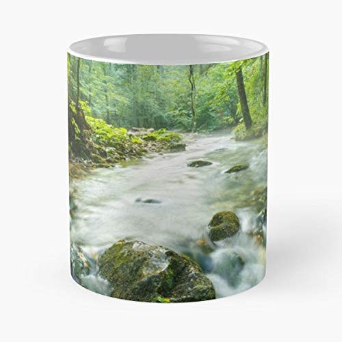 Beautiful Moss Mossy Beech - Funny Sophisticated Design Great Gifts -11 Oz Coffee Mug.the Best Gift For Holidays.
