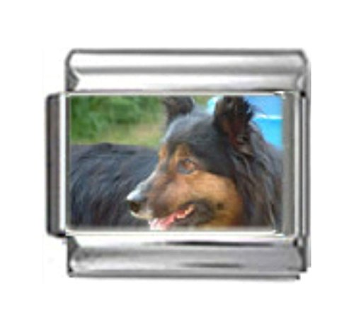Collie Dog Photo Charm - Stylysh Charms Border Collie Dog Photo Italian 9mm Link DG083