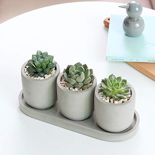 Terracotta Plant pots, Small Flower Pots Indoor, Plant Pot with Drainage Hole and Tray, Round Cylinder Pots for Plants Home and Office Decor Birthday Wedding – Plants Nor Included