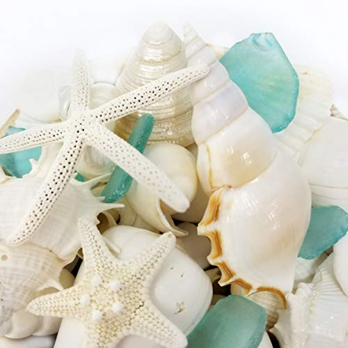 (Tumbler Home White Seashells with Sea Glass - Home Decor Wedding Luxury Sea Shell Mix, Christmas or Crafts - 30+ Items)
