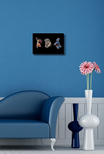 Betta Fish on Black Background Wall Decor