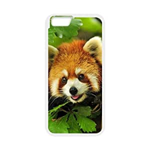 """PCSTORE Phone Case Of Raccoon For iPhone 6 Plus (5.5"""")"""
