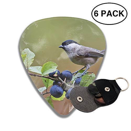 Animal Chickadee Birds Blueberry Passerine Celluloid Guitar Picks 6-pcs for Electric Acoustic Guitar