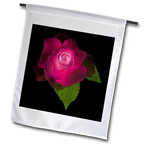 3dRose Danita Delimont - Flowers - USA, Maryland, Bethesda, Rose on Black, Digitally Altered - 18 x 27 inch Garden Flag (fl_313667_2)