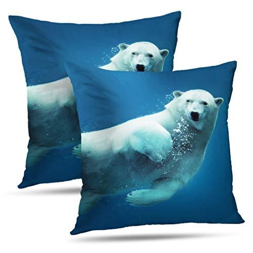Arctic Ocean Underwater Camera - 9