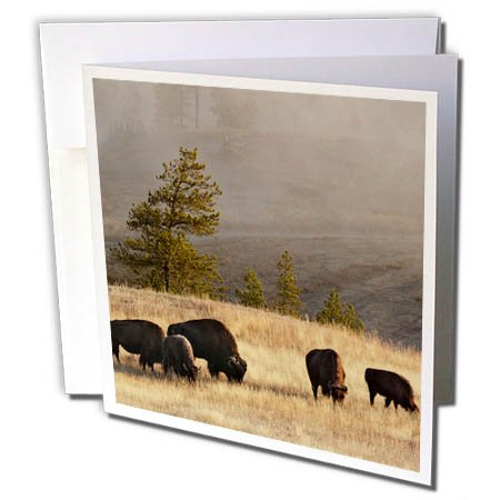 3dRose Danita Delimont - Bison - Herd of Bison in Upper Geyser Basin, Yellowstone NP, Wyoming - 1 Greeting Card with envelope (gc_259564_5) ()