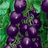 SD0133 Unique Rare Purple Cherry Tomato Vegetable Seeds, High Germination, 60-Days Money Back Guarantee (20 Seeds)