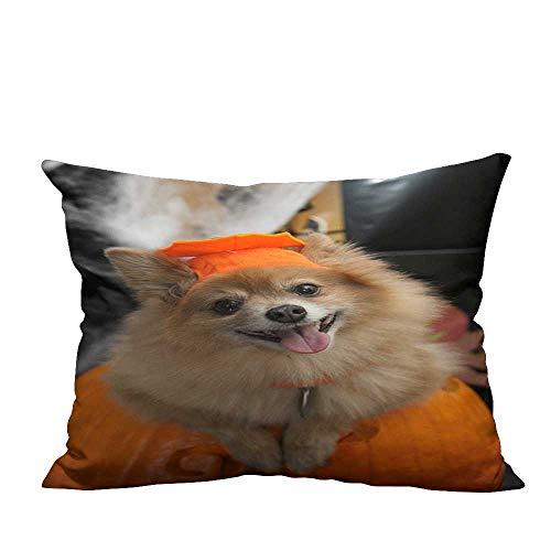 YouXianHome Sofa Waist Cushion Cover Halloween Costume Puppy Decorative for Kids Adults(Double-Sided Printing) 13x17.5 -