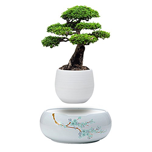 - Active Gear Guy Levitating Plant Pot with Japanese Style Design for Flowers Or Bonsai. Magnetic Levitation Creates A Beautiful Floating Display.