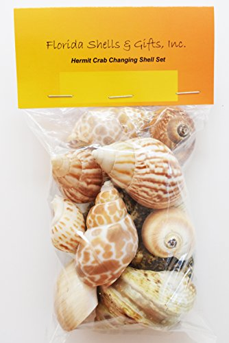 "FSG - Select 15 Hermit Crab Shells Assorted Changing Seashells Small 3/4""-2"" Size (Opening Size 3/8"" - 1 1/4"") Beautiful"