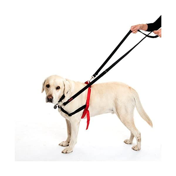 Company of Animals HALTI Training Lead 5