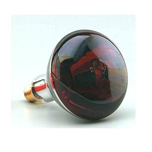Ampoule à chaleur infrarouge à vis 250 W E27 220-240 V Lumière rouge Émet de la chaleur F BRIGHT 2600496