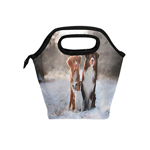 (Nova Scotia Duck Tolling Retriever Dogs Australian Shepherd And Jack Russell Terrier Together Insulated Lunch Bag Box Cooler Reusable Tote Bag Outdoor Travel Picnic With Shoulder Strap for Adults )