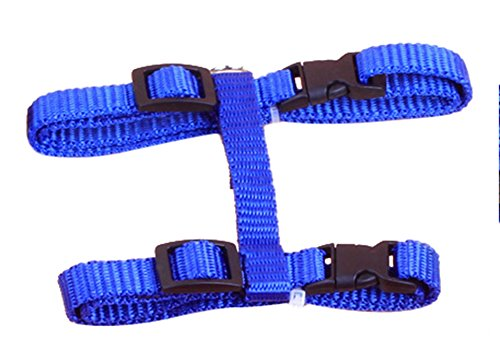 [Freerun Cat Lead Leash Halter Harness Kitten Nylon Strap Belt Safety Rope Adjustable Cat Dog Collar -] (Creative One Of A Kind Costumes)