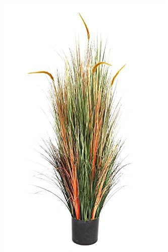 Laura Ashley 5 Foot Tall Onion Grass with Cattails