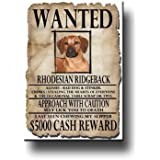 Rhodesian Ridgeback Wanted Fridge Magnet