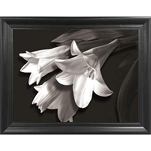 lily pictures - 4