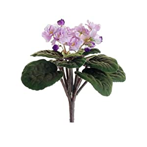 "10.5"" African Violet Bush Lavender (Pack of 12) 12"