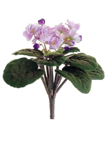 105-African-Violet-Bush-Lavender-Pack-of-12