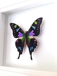 Real Butterfly Taxidermy Art- Butterflies, Butterfly Art, Insect Art, Entomology, Taxidermist, Interior Design, Bugs