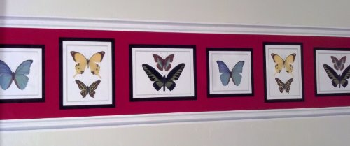 Wallpaper Garden Border Butterfly - Butterfly Collection Wallpaper Border