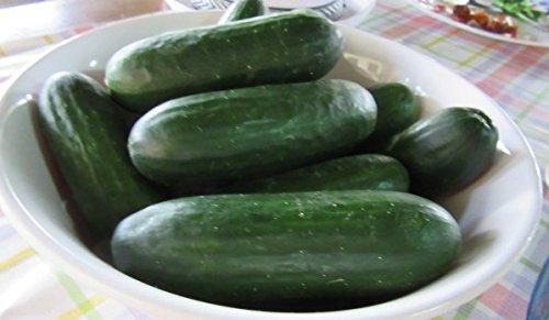 David's Garden Seeds Cucumber Pickling Puccini B961 (Green) 50 Hybrid Seeds