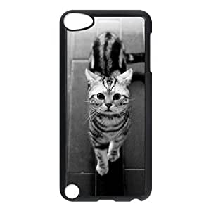 Winfors American Short Hair Cat Phone Case For Ipod Touch 5 [Pattern-4]