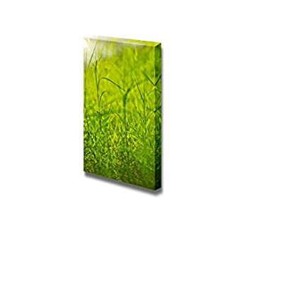 Fresh Green Grass Beside a River Nature Beauty Wall Decor, Premium Product, Gorgeous Portrait
