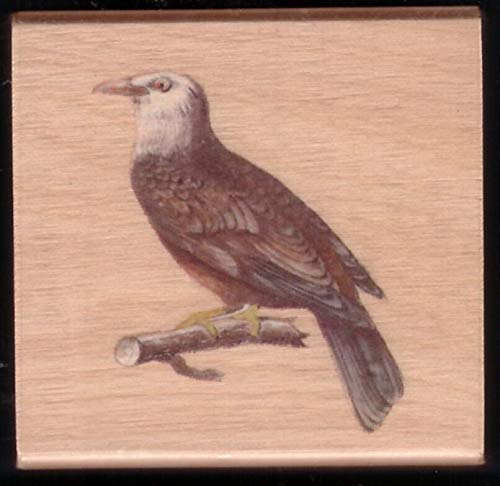 Rubber Stamp Frames Eagle Majestic Bird of Prey Branch Landscape New Wood Mount Hobby Rubber Stamp ()