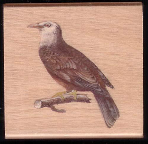 Rubber Stamp Frames Eagle Majestic Bird of Prey Branch Landscape New Wood Mount Hobby Rubber Stamp ()