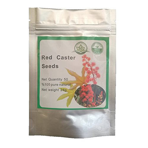 50 Red Castor Castor Bean Ricinus Communis Non-GMO Seeds ~ Chris