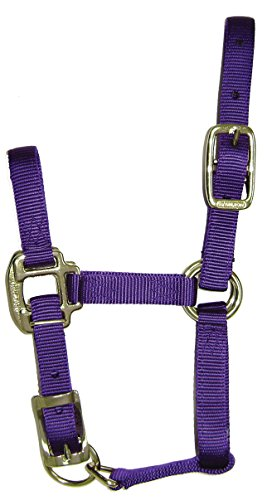 Quality Horse Halter - 2