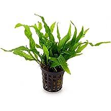 buy aquarium plants