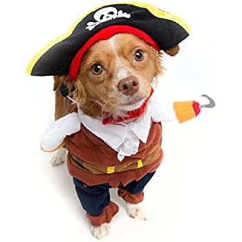 amazon com pirate dog costume limited edition medium pet
