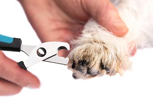 Dorakitten Pet Scissors,Dog Grooming Scissors Pet Beauty Scissors Dog Thinning Scissors Dog Barber Scissors Professional Hairdressing Pet nail clippers for Animal