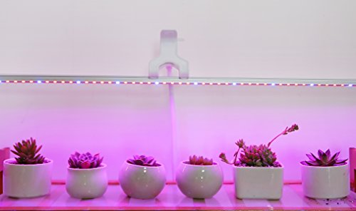 Ledy Led Grow Light 3.2ft 5050 Waterproof Flexible Soft Strip Grow Light For Plant Flower Herbs Seeds Seedlings Growing Red Blue 4:1 With DC 12V 2A Adaptor