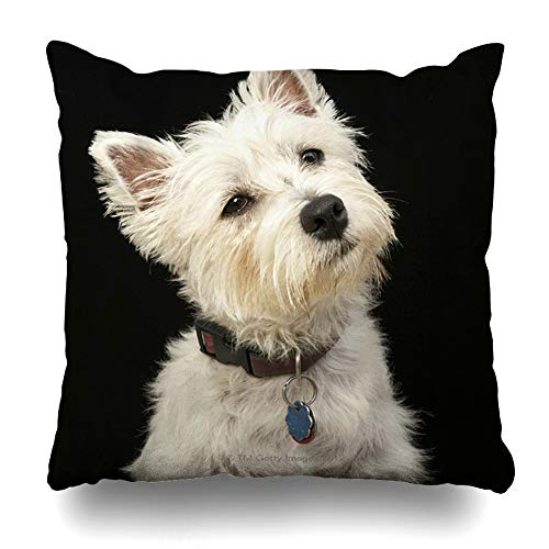 - Ahawoso Throw Pillow Covers Westie West Highland Terrier with Collar Pillowslip Square Size 18 x 18 Inches Cushion Cases Pillowcases