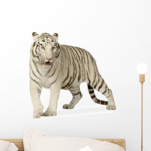 Wallmonkeys Siberian White Tiger Wall Decal Peel and Stick Animal Graphics (18 in W x 16 in H) WM347296