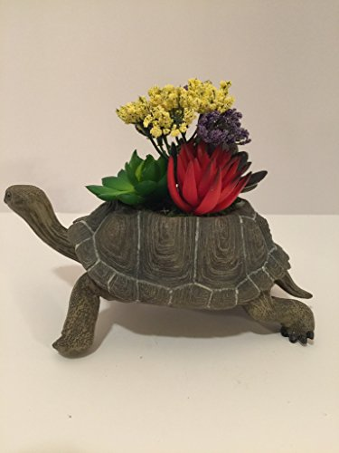 ANIMAL FUN - TURTLE VASE - SUCCULENT CACTUS WITH YELLOW AND PURPLE BABIES BREATH by Peters Partners Design