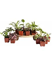 Leaf & Linen | Classic Collection Assorted Varieties of Indoor Live House Plants Beautiful & Easy Care, Set of 20,