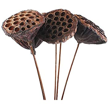 NWFashion 10PCS/Package Mini Natural Dried Brwon Lotus Pods with Stems (10-12CM)