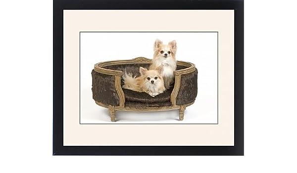 Con Marco Artwork de LA-6794 de perro - dos el pelo largo Chihuahuas perro sentado en silla/cama - en estudio: Amazon.es: Hogar
