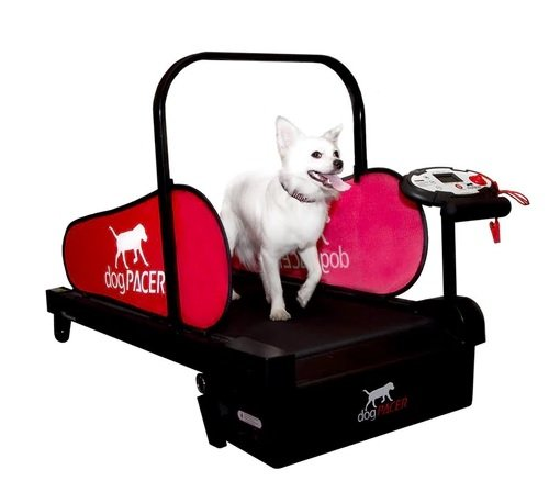 MiniPacer Doggie Treadmill by DogPACER