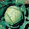 Cabbage Seeds- Copenhagen Market- 300+ Seeds